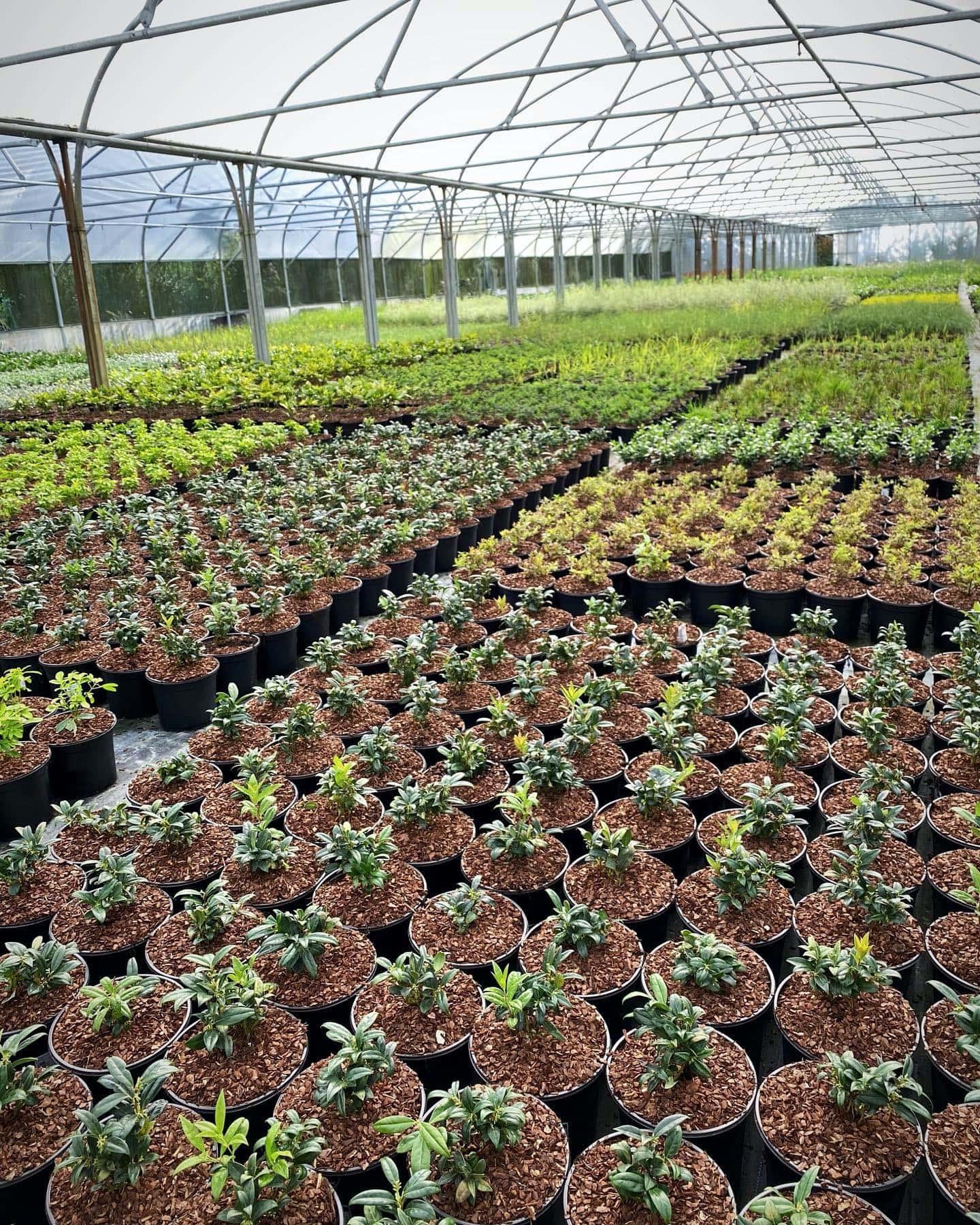 Naas Nursery - Gardenworld Nurseries