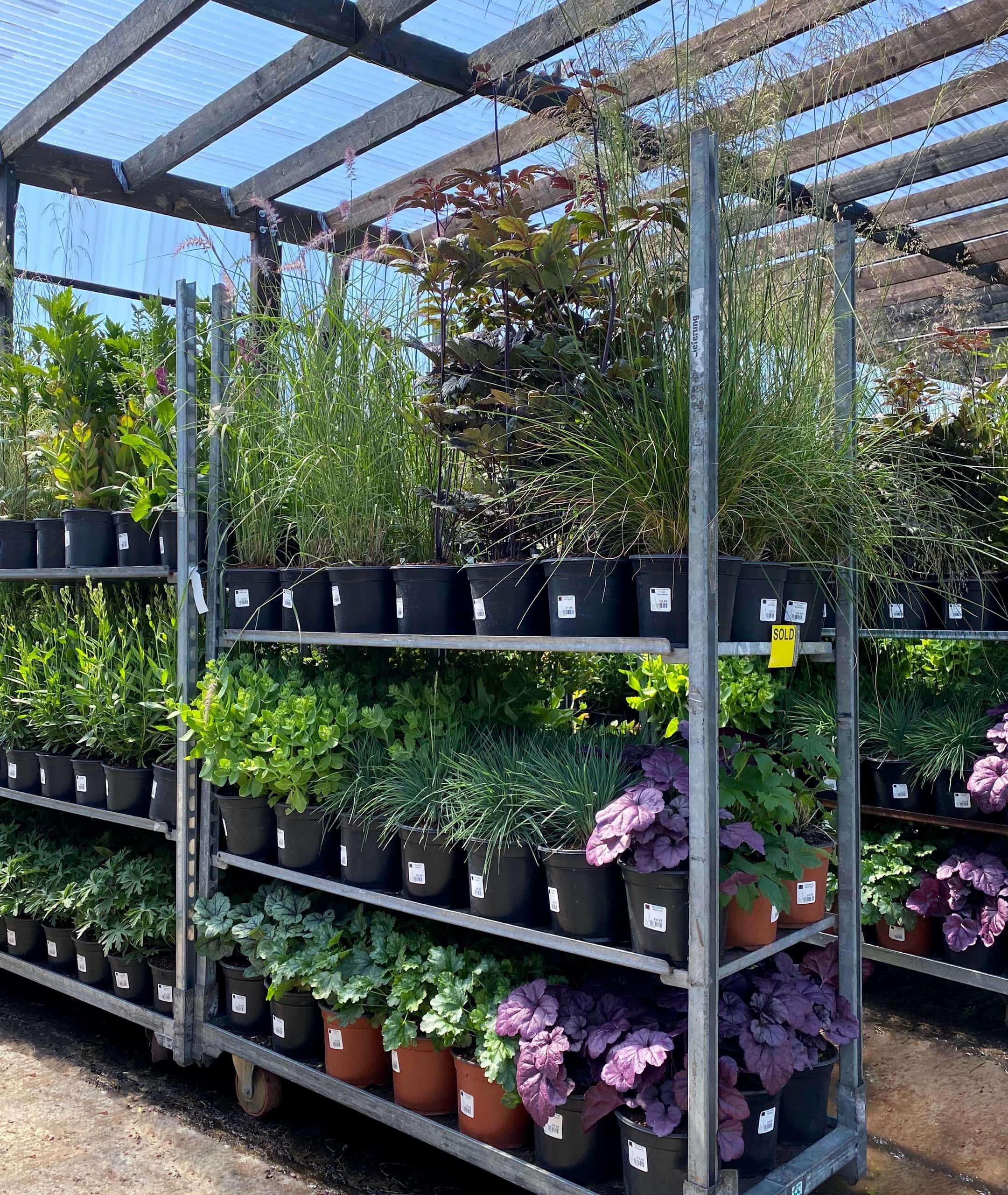 Perennials - trolley.jpg-pichi@1x