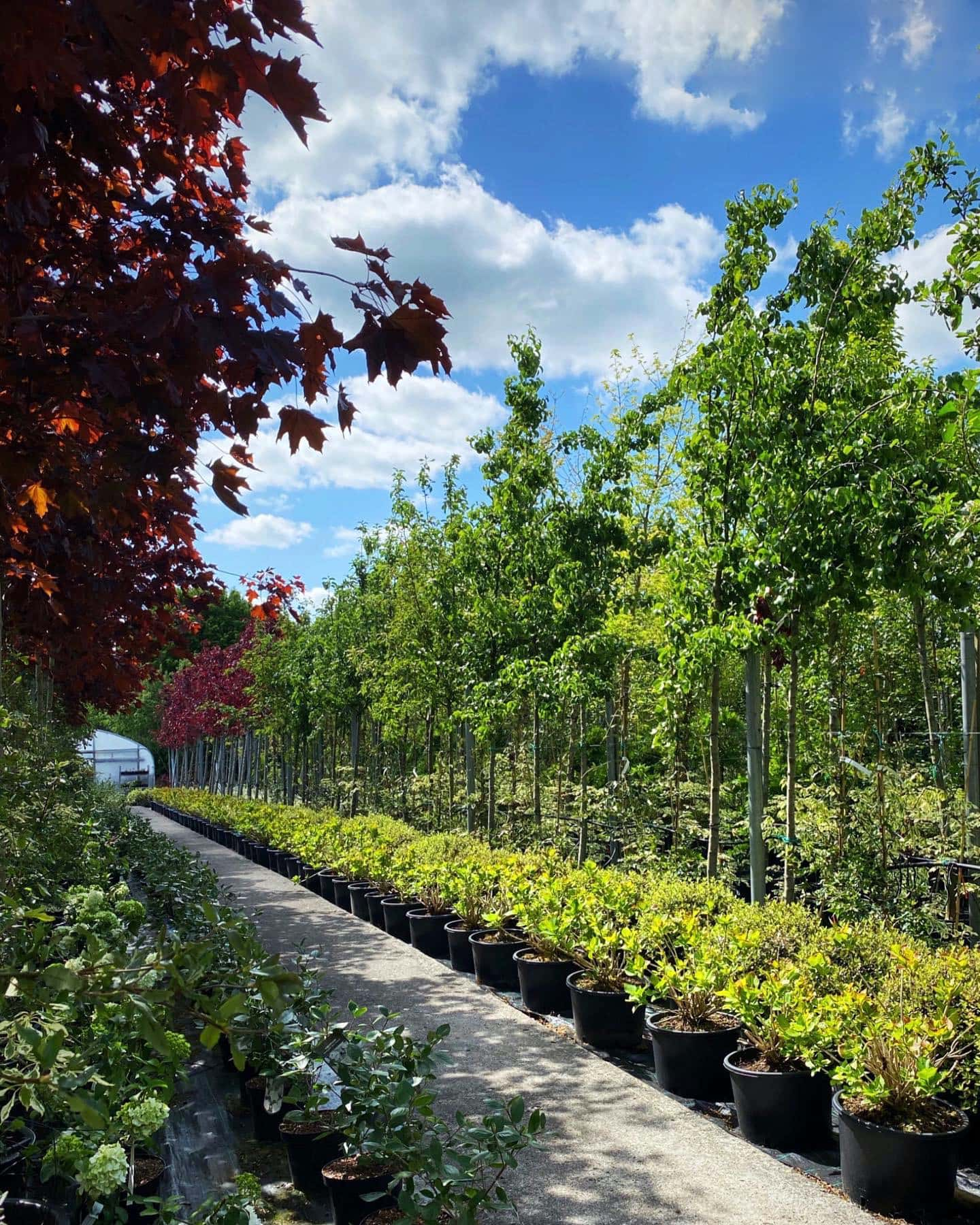 Naas Nusery - Gardenworld Nurseries